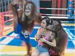 Artis Stella Chen Diraba-raba Orang Utan ketika Berkunjung ke Kebun Binatang