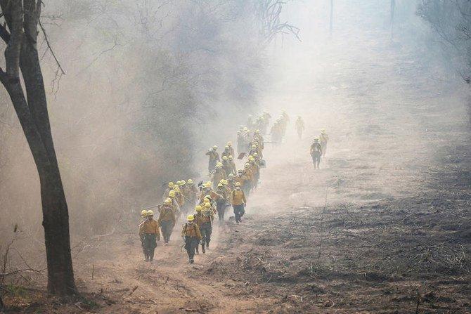 Lebih dari 2 juta hewan mati di kebakaran hutan Bolivia