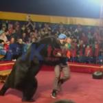 Video: Pelatih di serang beruang di pertunjukan sirkus