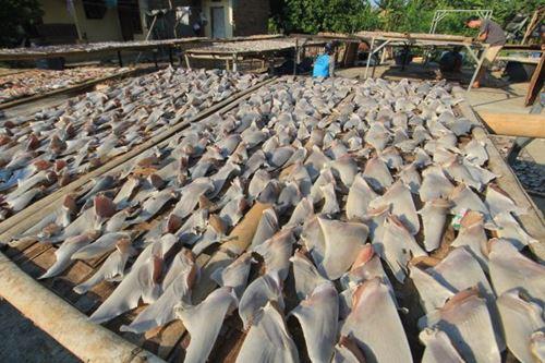 Kongres AS mengesahkan RUU yang melarang pembelian atau penjualan sirip hiu secara nasional