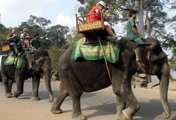 Kamboja Melarang Naik Gajah di Taman Kuil