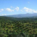Indonesia mengajukan gugatan WTO terhadap UE atas batasan minyak sawit
