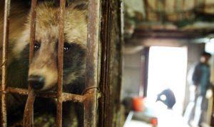 Hindari Penyebaran Virus Corona, China melarang perdagangan Hewan Liar