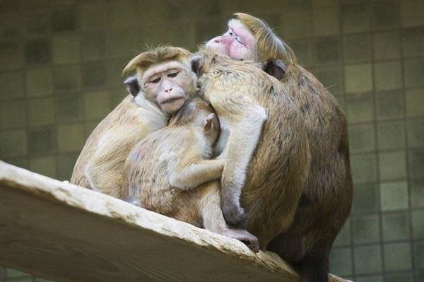 Lusinan monyet mati dalam kebakaran kebun binatang