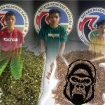 Tiga Remaja Belasan tahun Pelaku Narkotika Golongan 1 di Bekuk Sat Narkoba Polres Bone