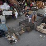 Shenzhen Cina melarang makan kucing dan anjing mulai 1 Mei 2020