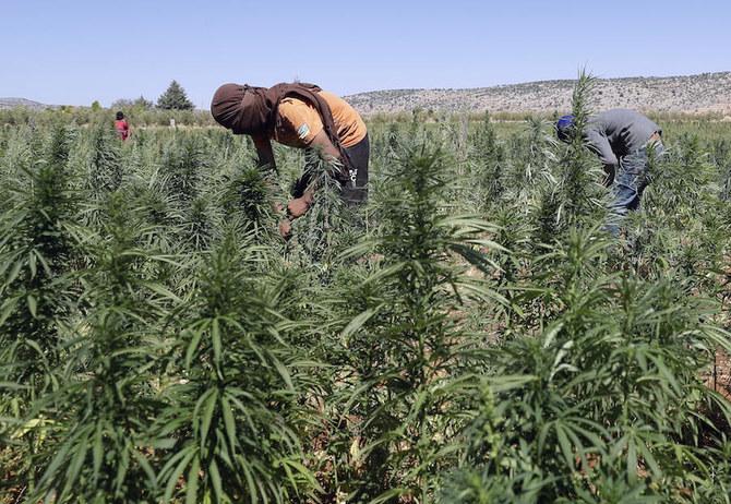 Lebanon menjadi penghasil narkoba terbesar yang pernah ada