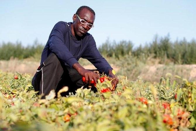 Geng kejahatan 'mengeksploitasi' pekerja pertanian Afrika di Italia