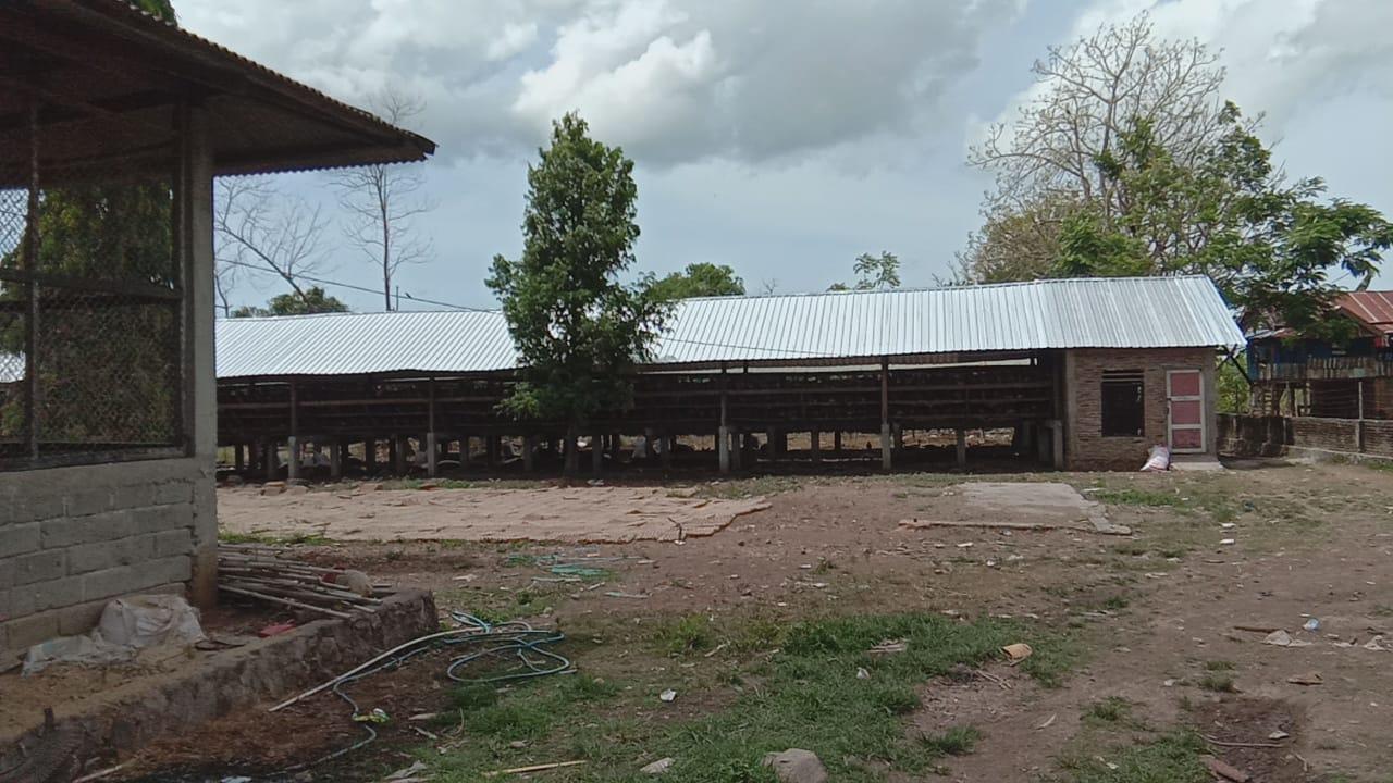 Bau menyengat kandang ayam Resahkan Warga sekitar Dusun Kirasa Desa Palambarae Bulukumba