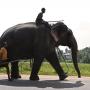 Konflik Manusia - Hewan, Sri Lanka menyaksikan kematian gajah tertinggi di dunia