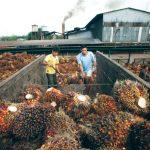Indonesia, Malaysia mengadakan pembicaraan untuk melawan bias minyak sawit