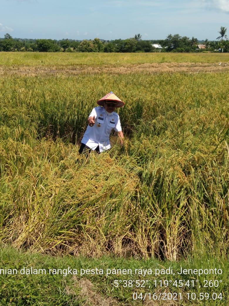 Lakukan Panen Raya Padi di Jeneponto, MENTAN: Pertanian di Jeneponto Harus Lebih Maju