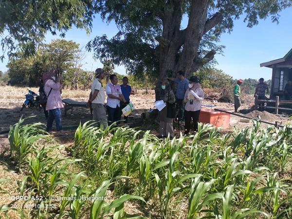 Bidang Tanaman Pangan Dampingi TIM Kementan saat Kunker Peninjauan Tanaman Jagung di Jeneponto