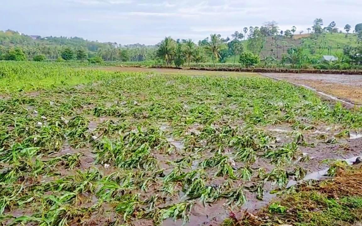 Banjir Bandang di Jeneponto Merusak Ribuan Hektar Lahan Pertanian Milik Warga