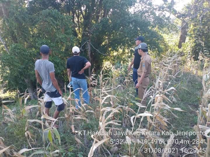 Bidang Tanaman Pangan Dinas Pertanian Jeneponto Pantau Kegiatan Program DPI di Tolo Utara