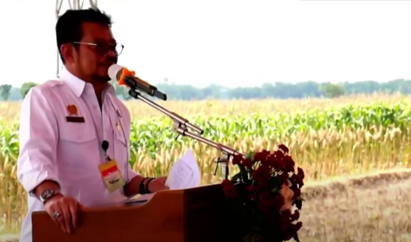Dinas Pertanian Kabupaten Jeneponto Lakukan Panen Raya Jagung Nusantara