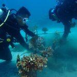 Transplantasi Karang DKP Provinsi Sulut diperbaiki YAPEKA Sulut